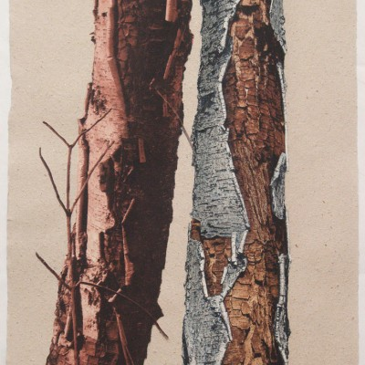 Hot Bark Duet by Lynne Johnson