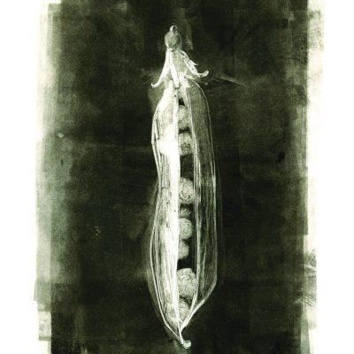 9 x 12 monotype, 2012